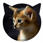 Kitty Clicker - Play Idle Game