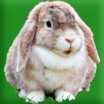 Rabbit Farm - Play Idle Game